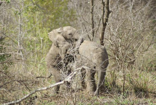 Amakhosi Safari Lodge: Two babies