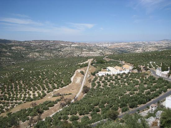 Casa La Celada: View of the Olive Groves from the Guest House