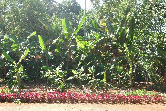 Maria Heritage Homes and Spa: beautiful surrounding
