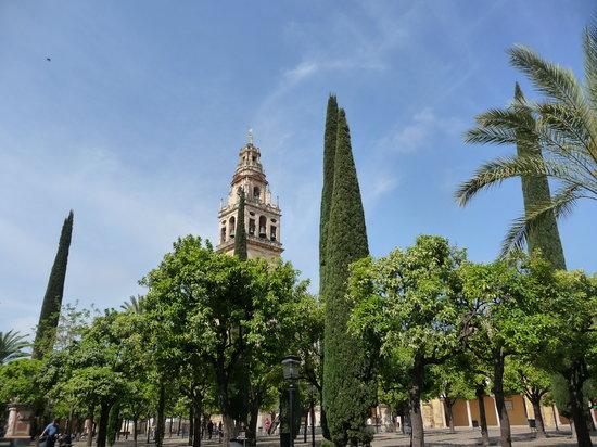 Cathédrale de Cordoue : Outside in the orange trees