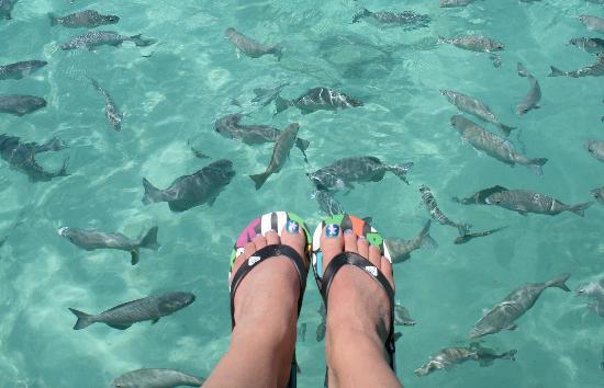 Barcelo Maya Colonial: Lots of fish to feed!