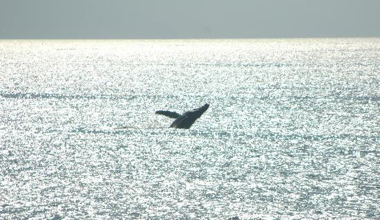 Hotel Playa Fiesta: One of many whale sightings.