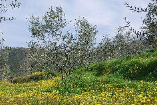 Relais Villa Belpoggio: fiori e ulivi