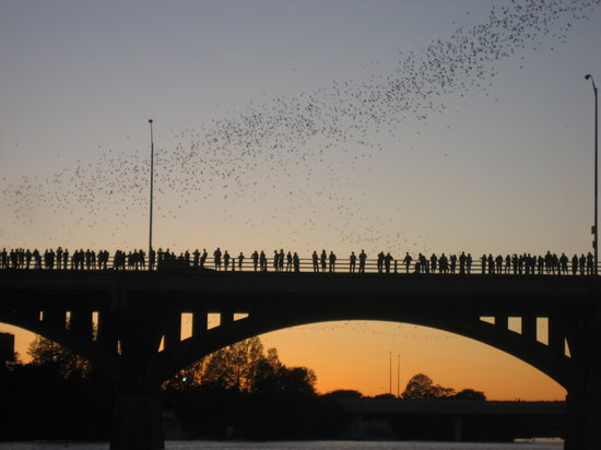 ‪Congress Avenue Bridge / Austin Bats‬
