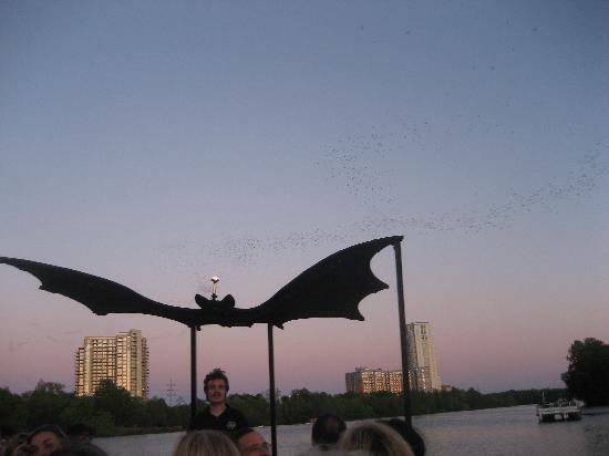 Austin, TX: Bat Cruise