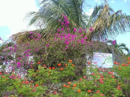 Caribbean Sea View Holiday Apartments: L' entrée de la propriété