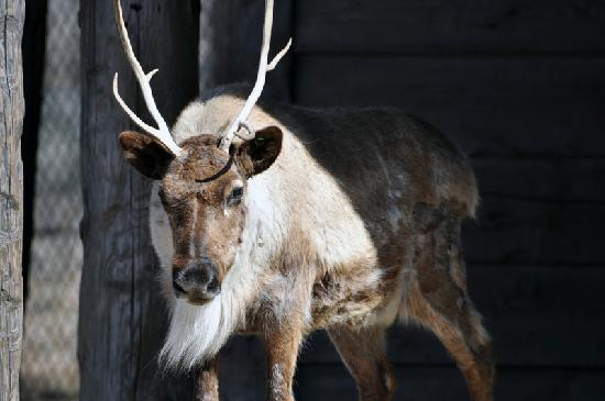 Caribou Picture Of Milwaukee County Zoo Tripadvisor