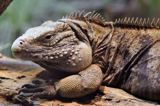 Milwaukee County Zoo: Big Lizard