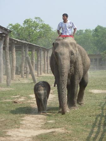 Hotel Parkside: Visit of the elephant breeding station