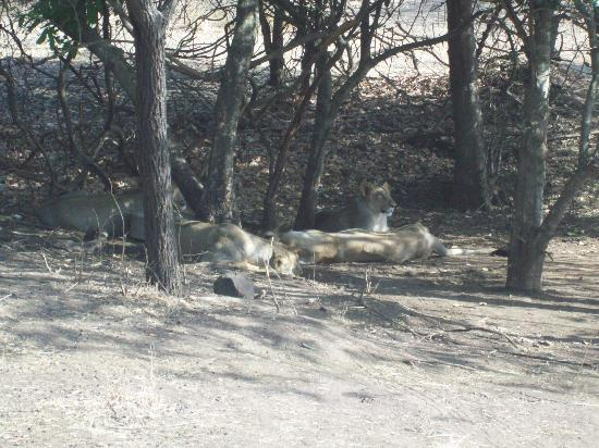 ササーンギル国立公園 Picture