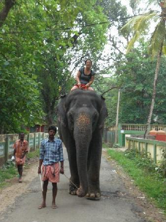 Ponmala Homes Bed & Breakfast : Elephant Safari at Kodanad near Ponmala Homes