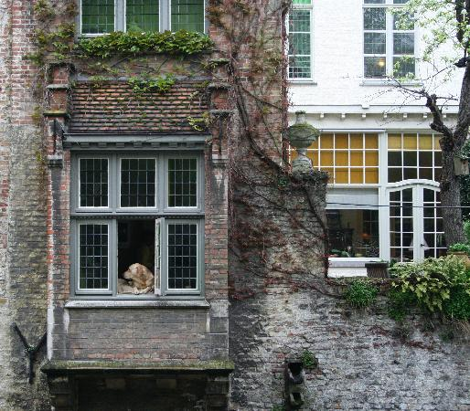 Cote Canal: The most famous dog in Bruges