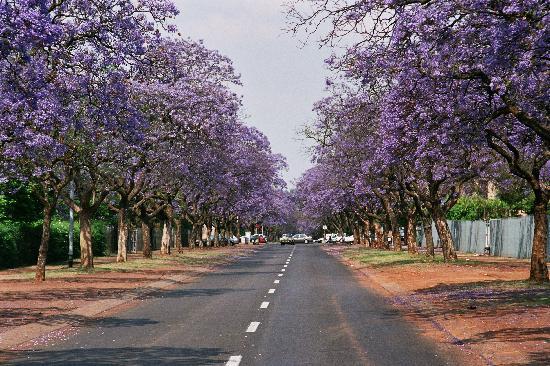 Pretoria in the Spring