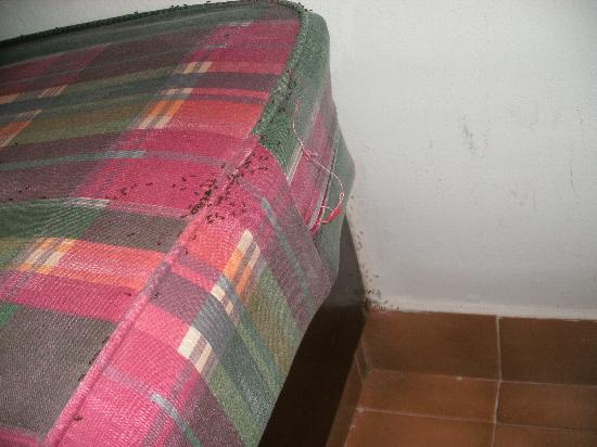 Bungalows El Palmeral: Ants in the sofa, where there should have been an extra bed.