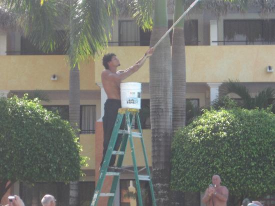 Iberostar Costa Dorada : cheeky monkey painting the sky by the pool