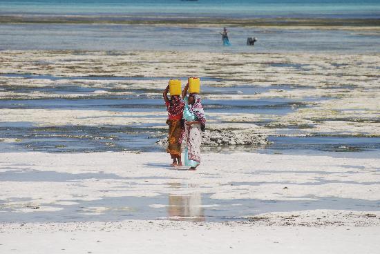 Hakuna Majiwe Beach Lodge: i colori della polpolazione