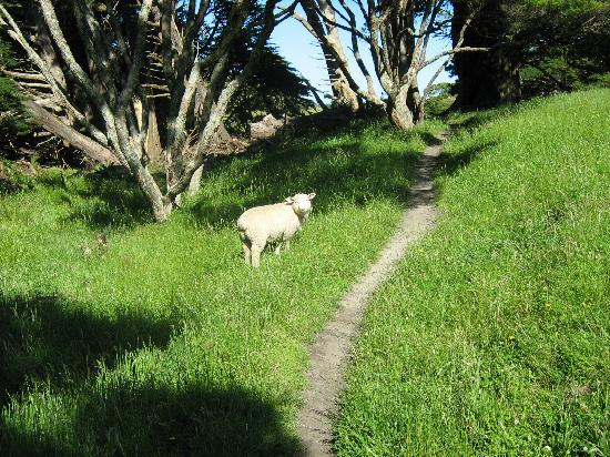 Collingwood Homestead: Hiking Near Farewell Spit