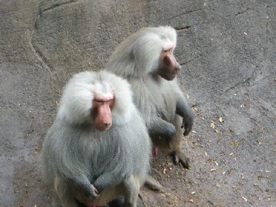 Hamburg Zoo: Monkeys