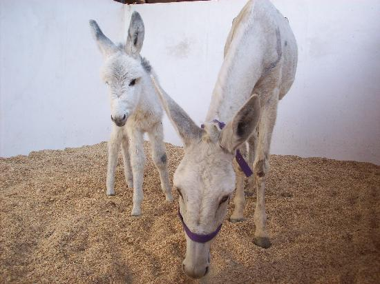 ACE- Animal Care in Egypt: Denzil and MUM