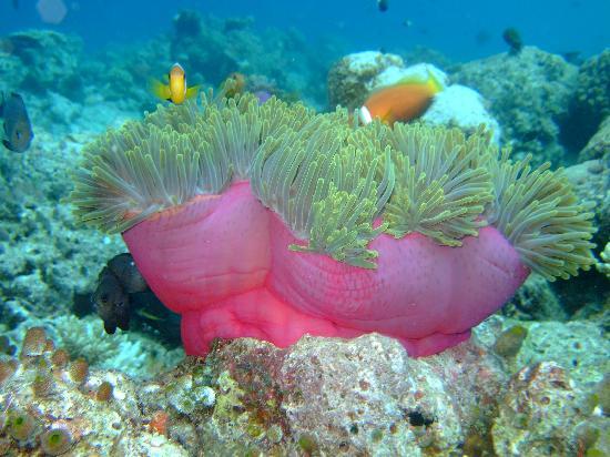 Ellaidhoo Maldives by Cinnamon: Nemo