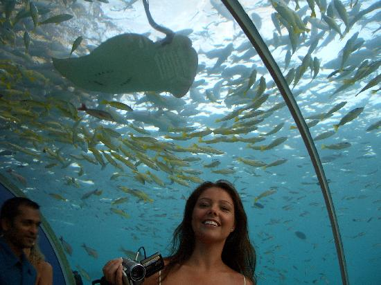 Ithaa Undersea Restaurant: the sting ray and fish...