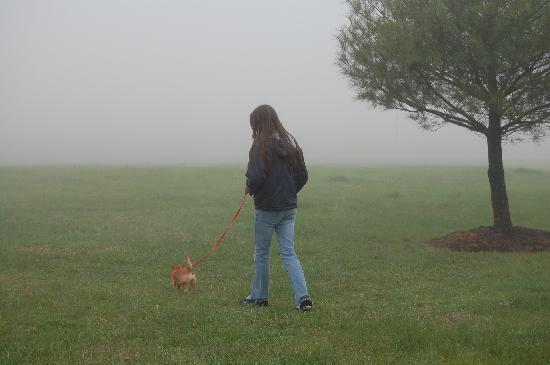 Days Inn Luray Shenandoah: Lots of walking room for doggies, it was very foggy that morning so you can't see how huge the a
