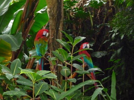 Bloedel Conservatory : more birds