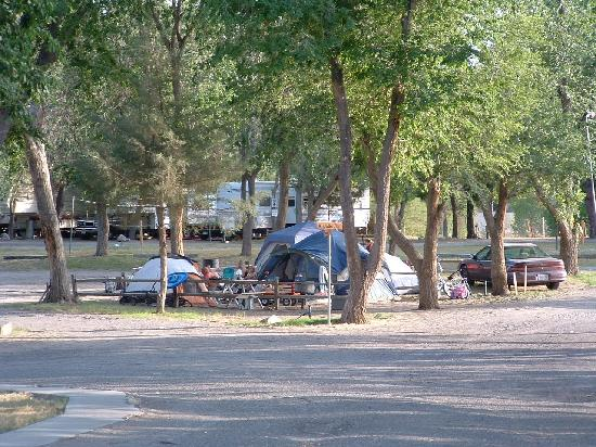 Shady Oasis Kampground : tenting in the shade