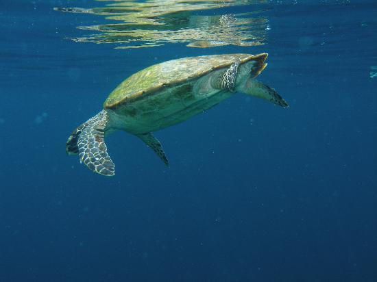 Hi dude, snorkel off Alam Gili