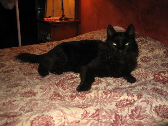 Gites La Balancelle : The host's cat!