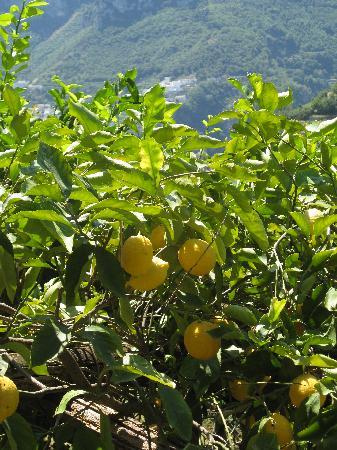 Scala, إيطاليا: Das Land wo die Zitronen blühen