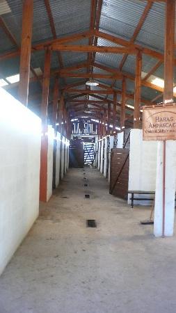 Haras Ampascachi: Boxes de Haras de Aras Ampascachi