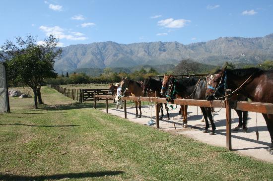 Haras Ampascachi: caballos peruanos de paso