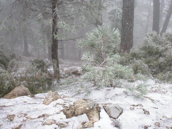 Natural Park Sierra de Cazorla : Subida al Puerto del Tejo- Sierra de Cazorla
