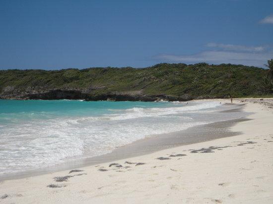 Isla de Vieques, Puerto Rico: Playa Navio