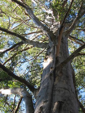 Pemberton Farm Chalets: Day 3 - Pemberton Gloucestor Tree - 2