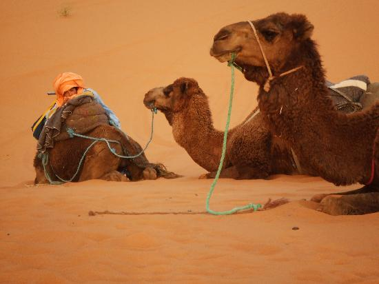Moroccan Sahara: Camels and guide at rest