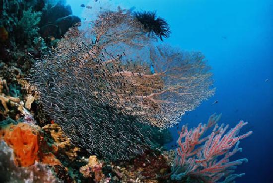 Dive Indonesia Bungalow