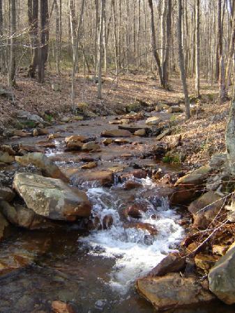 Mountain Creek Cabins : creek in back of cabin