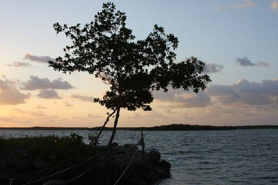 Key Largo House Boatel: Sunrise, from boat two.