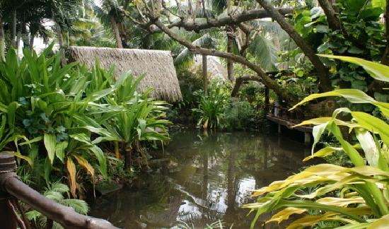 Pacific Resort Rarotonga: loved the tropical garden layout