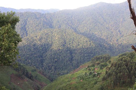 Nkuringo Bwindi Gorilla Lodge: View of Biwindi from the campsite