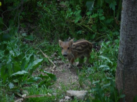 Hotel Humaina: Another evening visitor