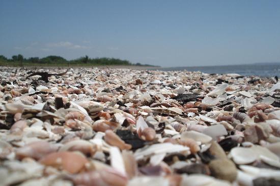 Hotel Hibiscus Garden: shells