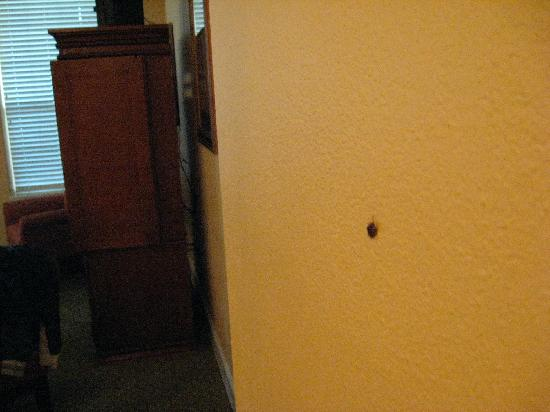 Royal Dunes Resort: More roaches