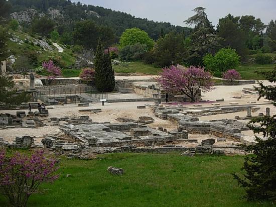 Saint-Rémy-de-Provence, France : L'arbre de Judée au Glanum