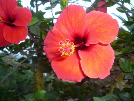 Calador: Fleur dans le jardin