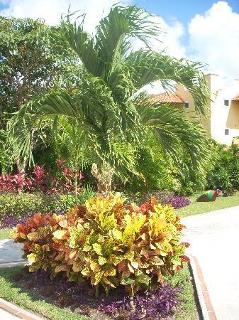 Occidental Cozumel: Beautiful landscap