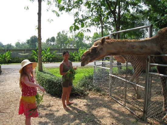 Horizon Village & Resort: Feeding the animals in the Botanical garden
