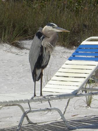 Sandpiper Inn: Wildlife